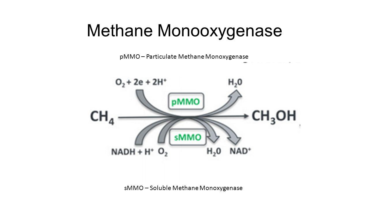 Methane Monooxygenase pMMO – Particulate Methane Monoxygenase sMMO – Soluble Methane Monoxygenase