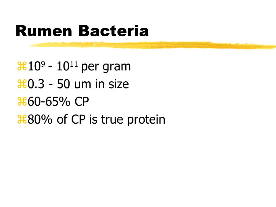 Rumen Bacteria z10 9 - 10 11 per gram z0.3 - 50 um in size z60-65% CP z80% of CP is true protein