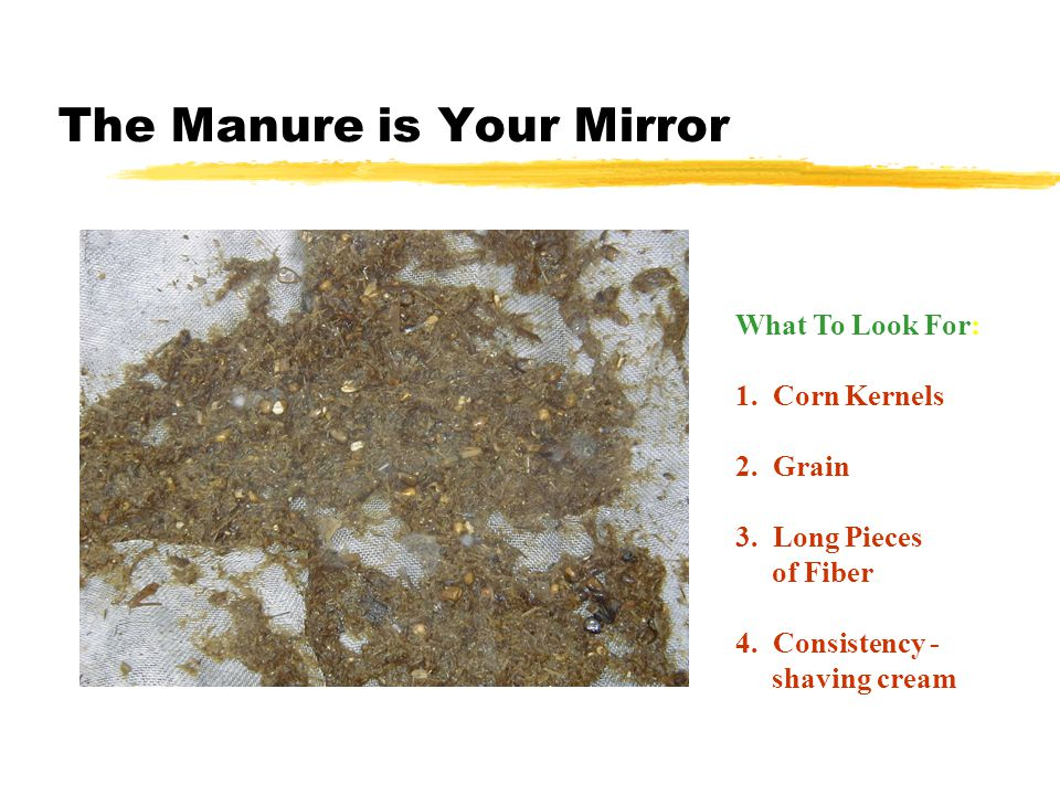 The Manure is Your Mirror What To Look For: 1. Corn Kernels 2.