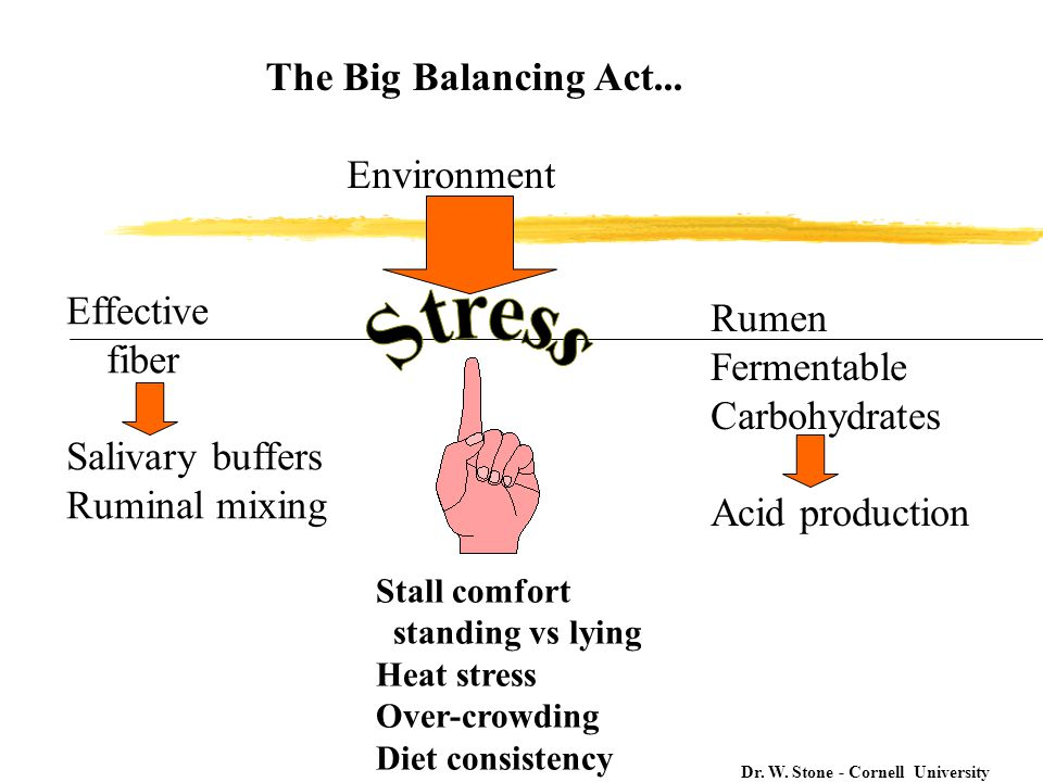 The Big Balancing Act...