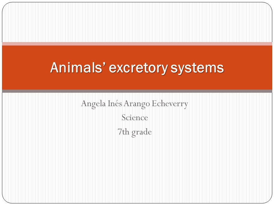 Angela Inés Arango Echeverry Science 7th grade Animals' excretory systems