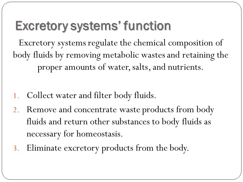 Excretory systems' function Excretory systems regulate the chemical composition of body fluids by removing metabolic wastes and retaining the proper amounts of water, salts, and nutrients.