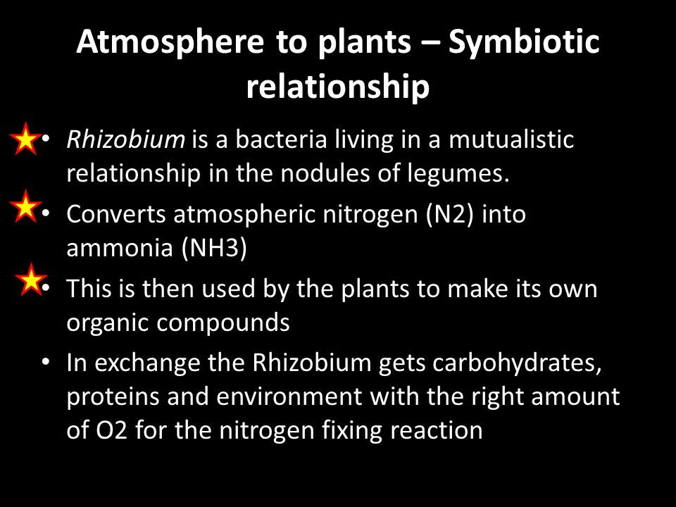 Atmosphere to plants – Symbiotic relationship Rhizobium is a bacteria living in a mutualistic relationship in the nodules of legumes.