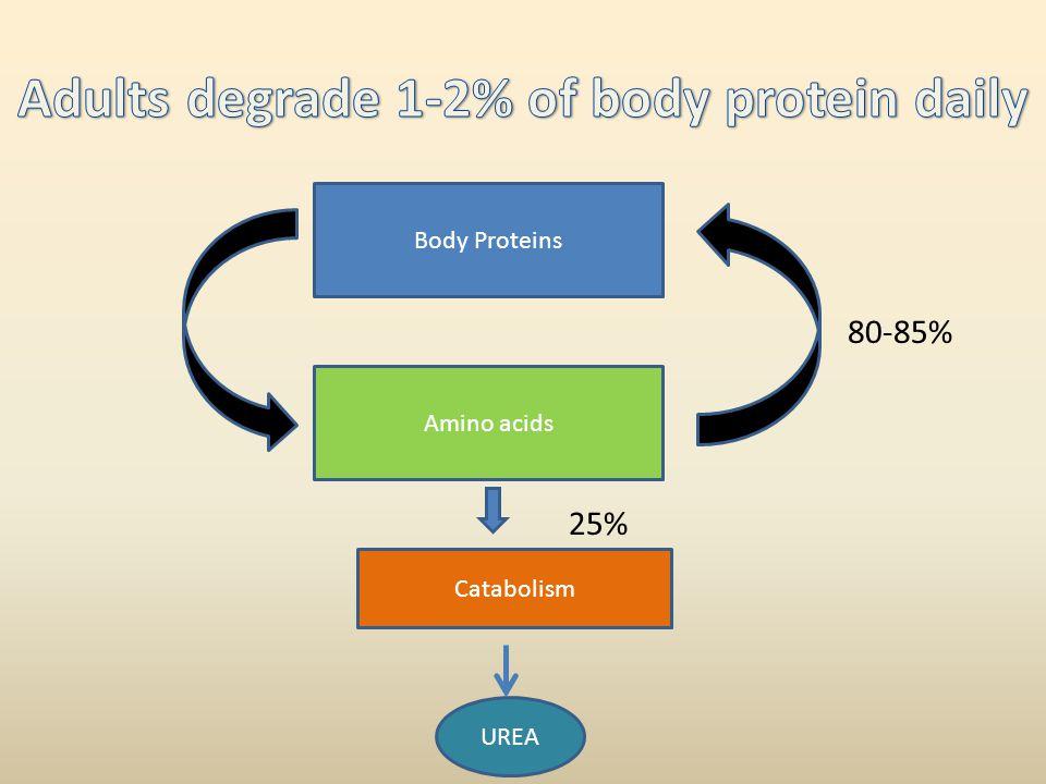 Body Proteins Amino acids Catabolism UREA 25% 80-85%
