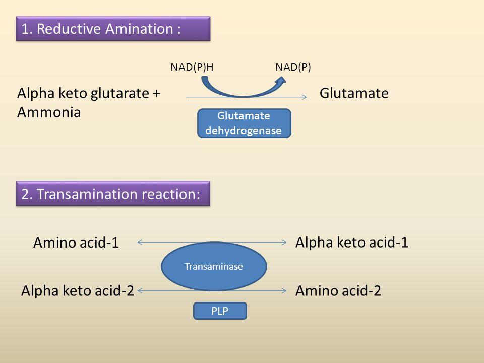 1. Reductive Amination : Alpha keto glutarate + Ammonia Glutamate NAD(P)HNAD(P) 2. Transamination reaction: Amino acid-1 Alpha keto acid-1 Amino acid-