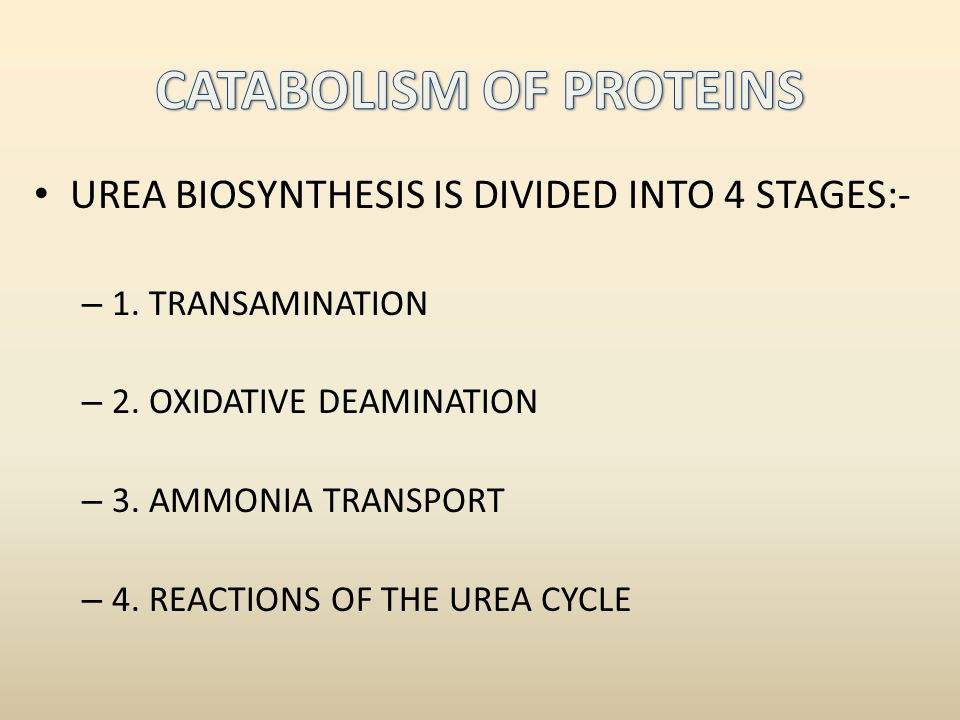 UREA BIOSYNTHESIS IS DIVIDED INTO 4 STAGES:- – 1.TRANSAMINATION – 2.