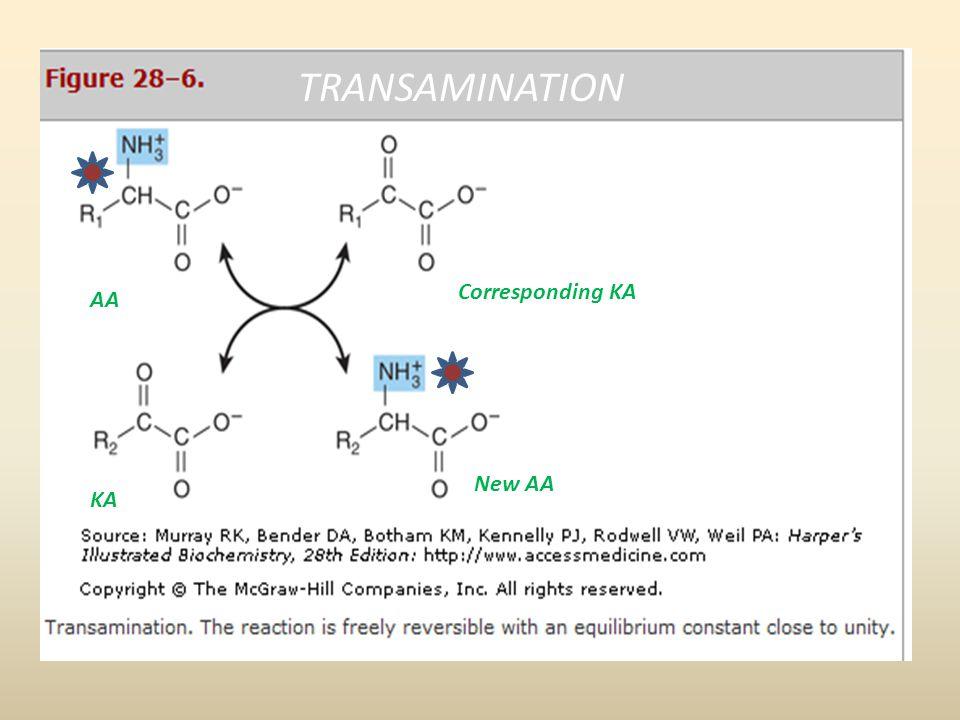 KA AA Corresponding KA New AA TRANSAMINATION