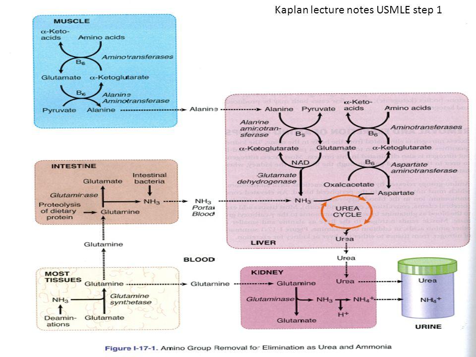 Kaplan lecture notes USMLE step 1