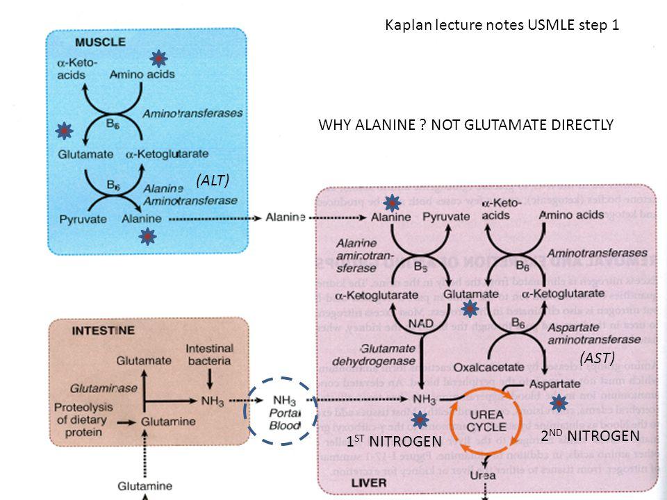 ` Kaplan lecture notes USMLE step 1 WHY ALANINE ? NOT GLUTAMATE DIRECTLY 2 ND NITROGEN 1 ST NITROGEN (AST) (ALT)