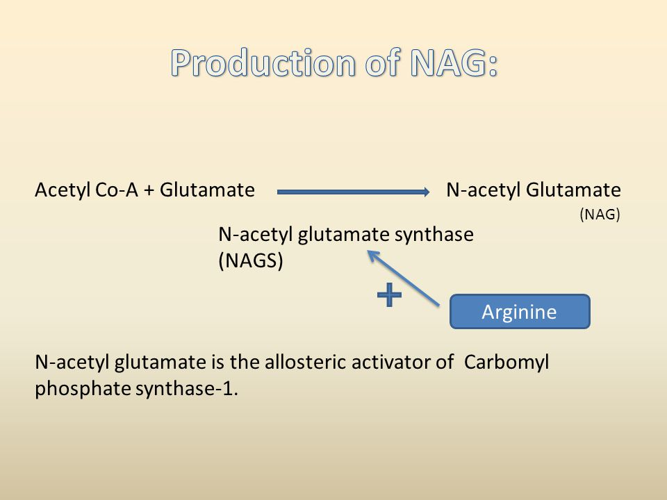 Acetyl Co-A + GlutamateN-acetyl Glutamate N-acetyl glutamate synthase (NAGS) (NAG) N-acetyl glutamate is the allosteric activator of Carbomyl phosphat