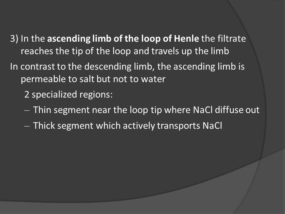 3)In the ascending limb of the loop of Henle the filtrate reaches the tip of the loop and travels up the limb In contrast to the descending limb, the ascending limb is permeable to salt but not to water 2 specialized regions: – Thin segment near the loop tip where NaCl diffuse out – Thick segment which actively transports NaCl