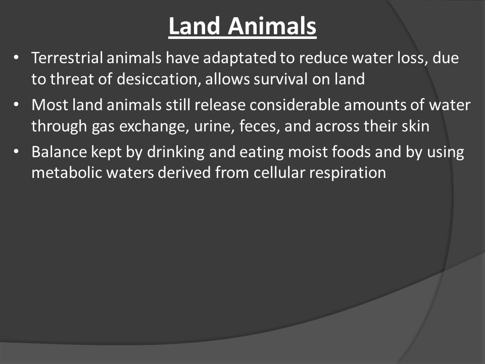 Land Animals Terrestrial animals have adaptated to reduce water loss, due to threat of desiccation, allows survival on land Most land animals still release considerable amounts of water through gas exchange, urine, feces, and across their skin Balance kept by drinking and eating moist foods and by using metabolic waters derived from cellular respiration