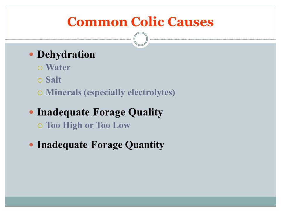 So How Do We Prevent Colic.