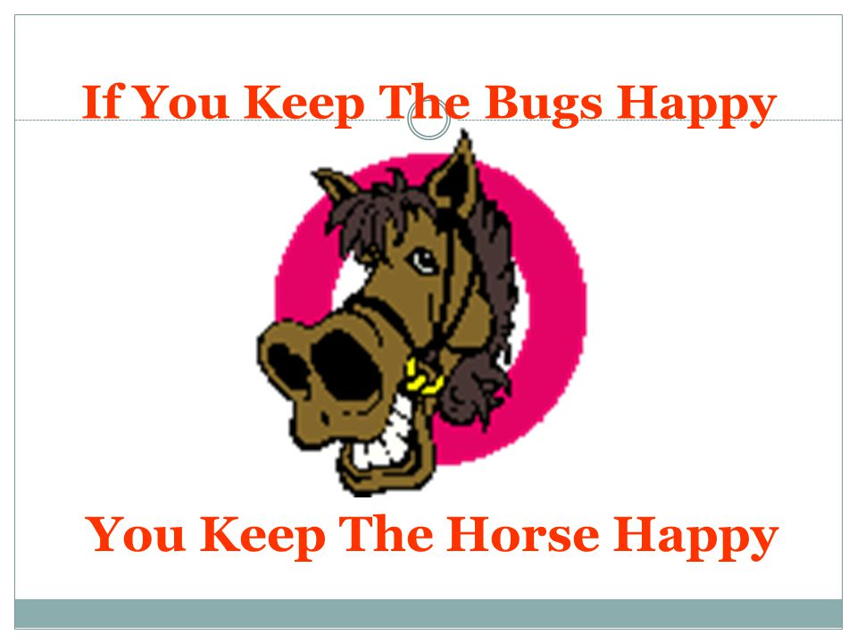 What Makes Happy Bugs.