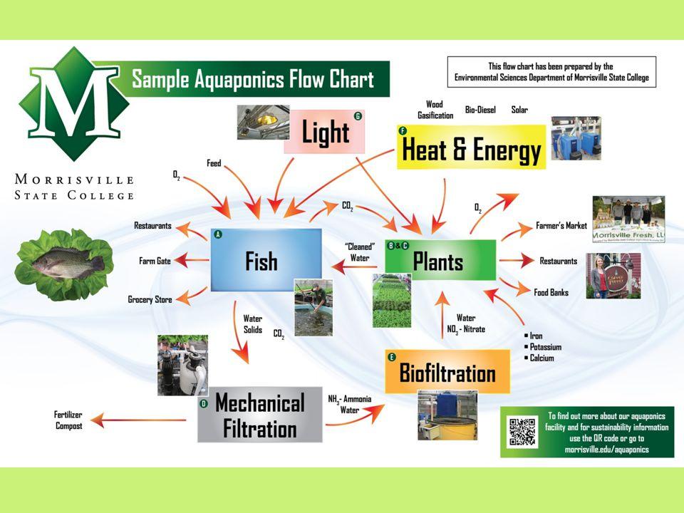 Aquaponics flowchart Table of Contents A.FishFish B.