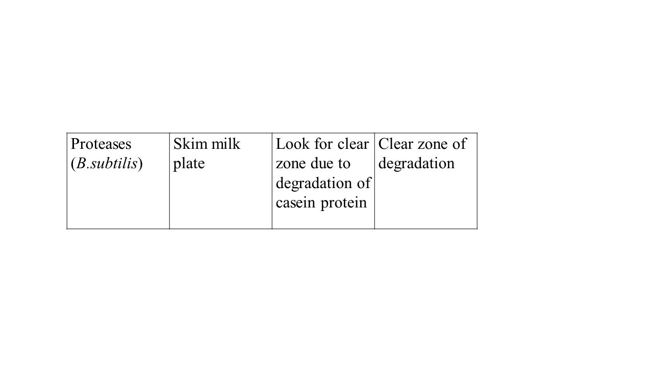 Proteases (B.subtilis) Skim milk plate Look for clear zone due to degradation of casein protein Clear zone of degradation