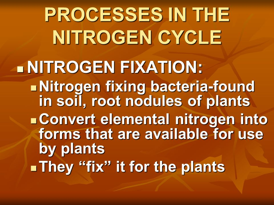 PROCESSES IN THE NITROGEN CYCLE NITROGEN FIXATION: NITROGEN FIXATION: Nitrogen fixing bacteria-found in soil, root nodules of plants Nitrogen fixing bacteria-found in soil, root nodules of plants Convert elemental nitrogen into forms that are available for use by plants Convert elemental nitrogen into forms that are available for use by plants They fix it for the plants They fix it for the plants