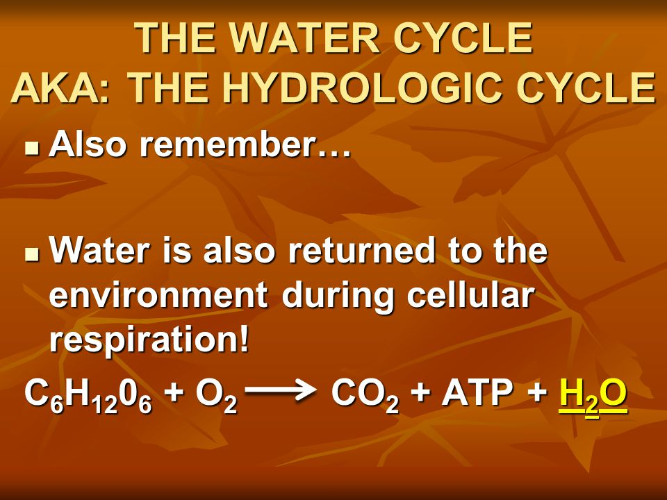 THE WATER CYCLE AKA: THE HYDROLOGIC CYCLE Also remember… Also remember… Water is also returned to the environment during cellular respiration.