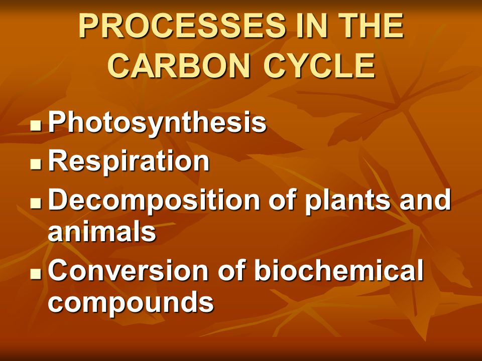 OTHER PROCESSES IN THE CARBON CYCLE Combustion Combustion When wood or fossil fuels are burned, CO 2 is released into the atmosphere When wood or fossil fuels are burned, CO 2 is released into the atmosphere