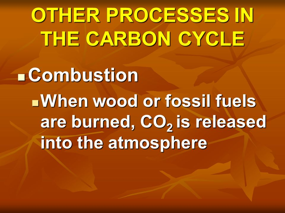 OTHER PROCESSES IN THE CARBON CYCLE Weathering of carbonate rocks Weathering of carbonate rocks Bones/shells fall to the bottom of oceans/lakes & are incorporated into sedimentary rocks Bones/shells fall to the bottom of oceans/lakes & are incorporated into sedimentary rocks When they decompose, Carbon is released into ocean, atmosphere When they decompose, Carbon is released into ocean, atmosphere