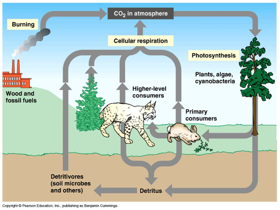 THE WATER CYCLE AKA: THE HYDROLOGIC CYCLE Water is a necessary substance for the life processes of all living organisms