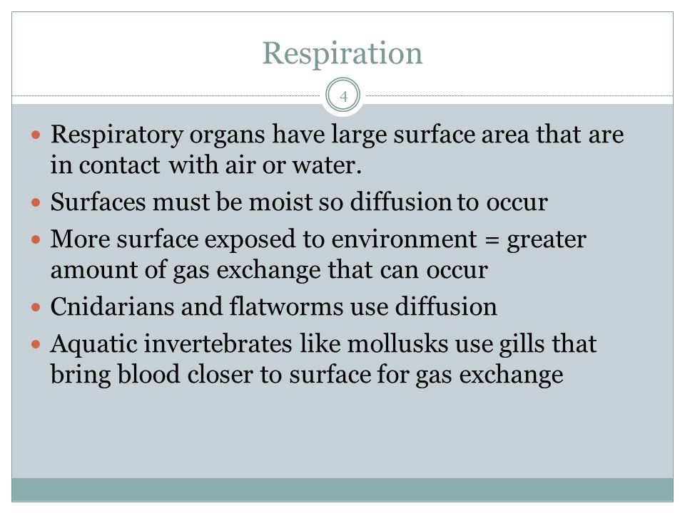 Respiration 4 Respiratory organs have large surface area that are in contact with air or water. Surfaces must be moist so diffusion to occur More surf