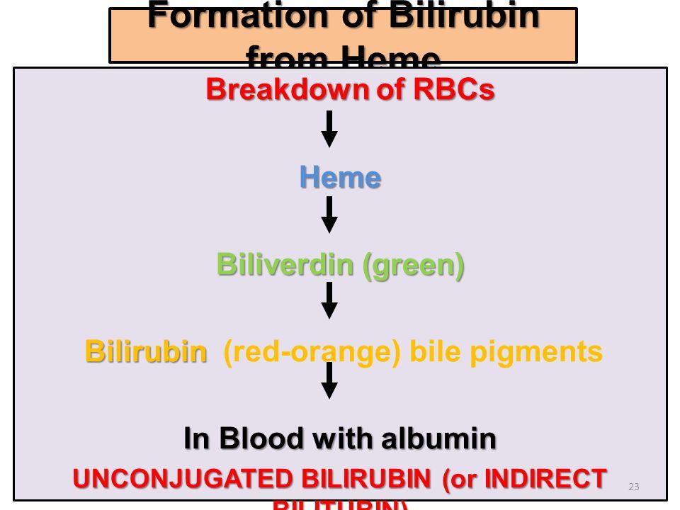 Formation of Bilirubin from Heme Breakdown of RBCs Breakdown of RBCsHeme Biliverdin (green) Bilirubin Bilirubin (red-orange) bile pigments In Blood wi