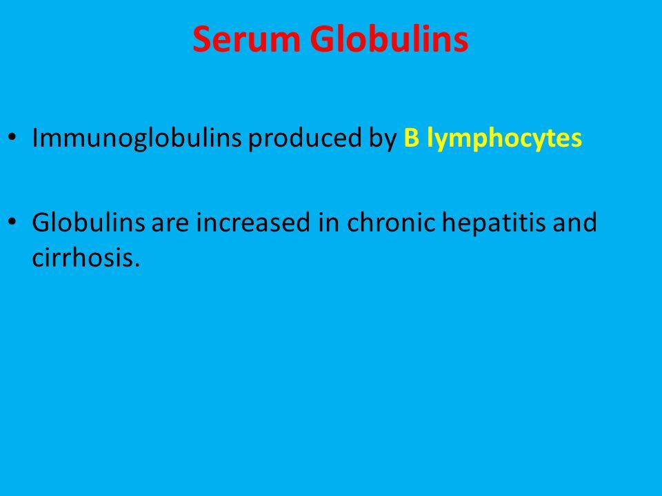 Serum Globulins Immunoglobulins produced by B lymphocytes Globulins are increased in chronic hepatitis and cirrhosis.