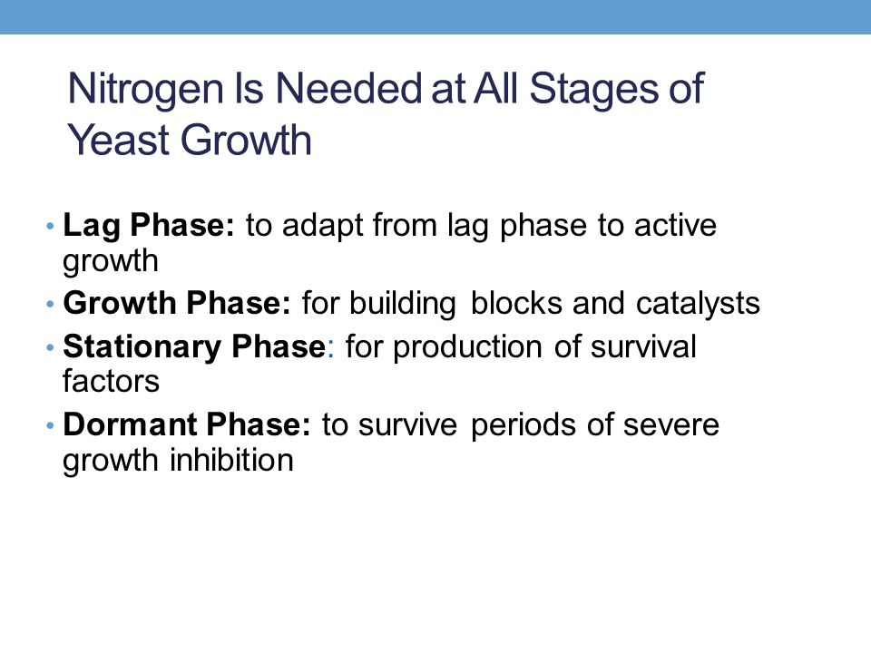 Nitrogen Is Needed at All Stages of Yeast Growth Lag Phase: to adapt from lag phase to active growth Growth Phase: for building blocks and catalysts Stationary Phase: for production of survival factors Dormant Phase: to survive periods of severe growth inhibition