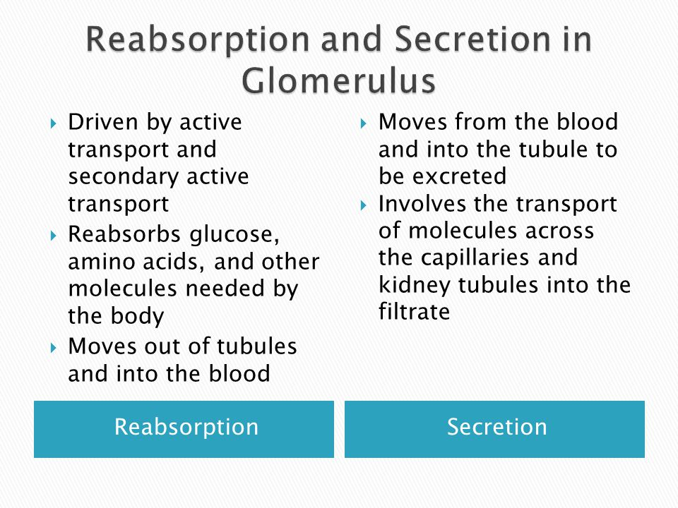 ReabsorptionSecretion  Driven by active transport and secondary active transport  Reabsorbs glucose, amino acids, and other molecules needed by the