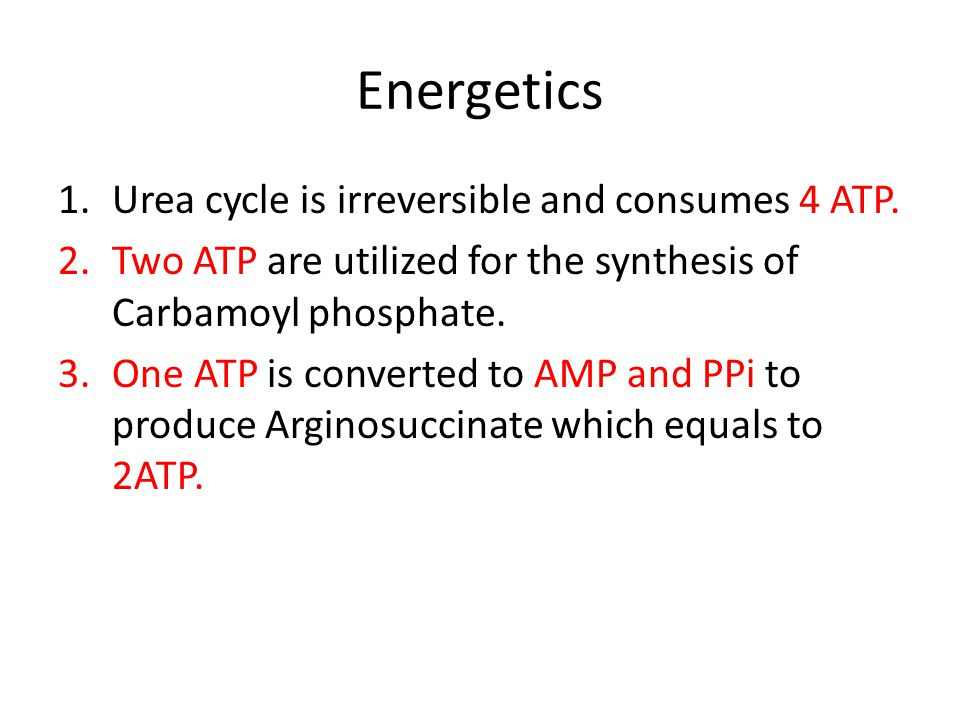 Energetics 1.Urea cycle is irreversible and consumes 4 ATP.