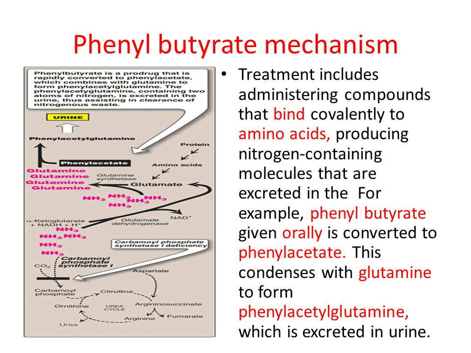 Phenyl butyrate mechanism Treatment includes administering compounds that bind covalently to amino acids, producing nitrogen-containing molecules that are excreted in the For example, phenyl butyrate given orally is converted to phenylacetate.
