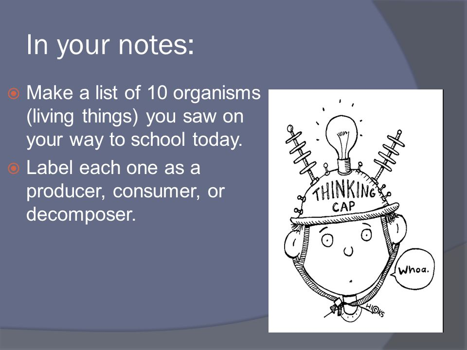 In your notes:  Make a list of 10 organisms (living things) you saw on your way to school today.