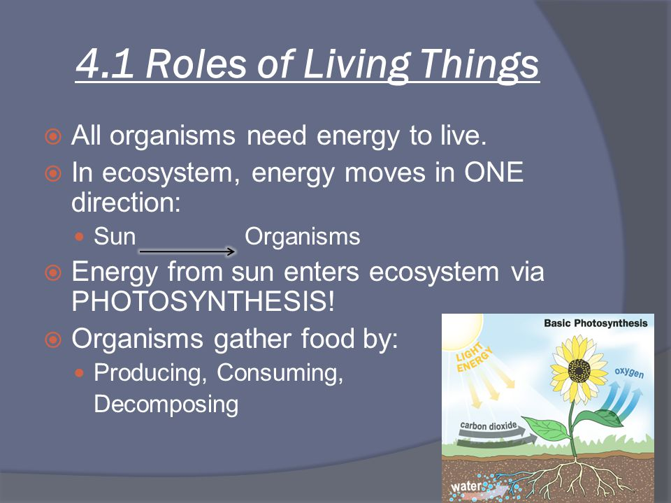 4.1 Roles of Living Things  All organisms need energy to live.  In ecosystem, energy moves in ONE direction: Sun Organisms  Energy from sun enters