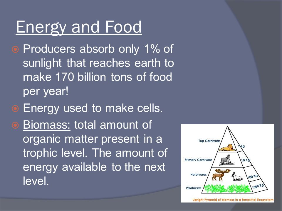 Energy and Food  Producers absorb only 1% of sunlight that reaches earth to make 170 billion tons of food per year!  Energy used to make cells.  Bi