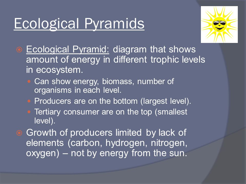 Ecological Pyramids  Ecological Pyramid: diagram that shows amount of energy in different trophic levels in ecosystem. Can show energy, biomass, numb