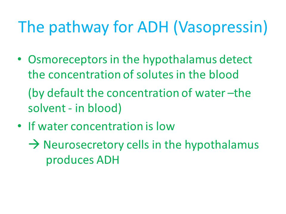 The pathway for ADH (Vasopressin) Osmoreceptors in the hypothalamus detect the concentration of solutes in the blood (by default the concentration of