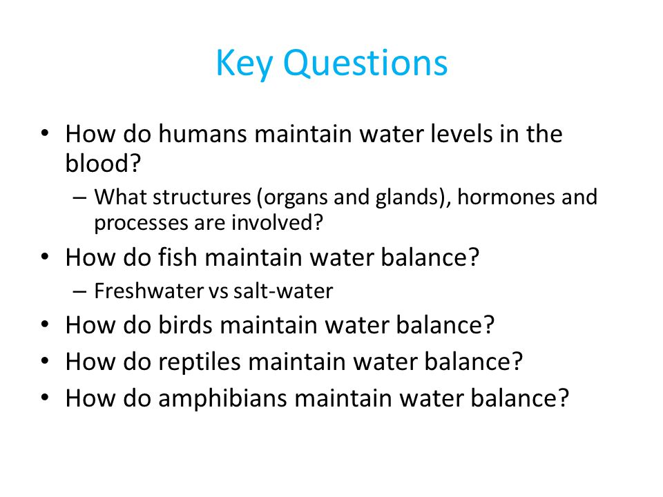 Key Questions How do humans maintain water levels in the blood? – What structures (organs and glands), hormones and processes are involved? How do fis
