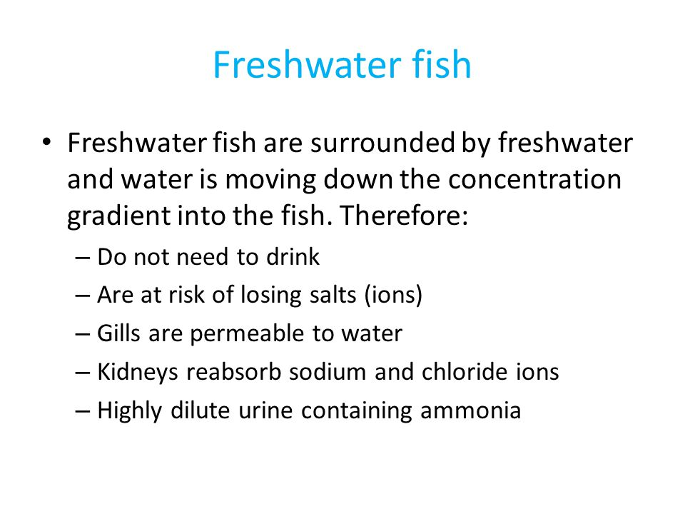 Freshwater fish Freshwater fish are surrounded by freshwater and water is moving down the concentration gradient into the fish. Therefore: – Do not ne