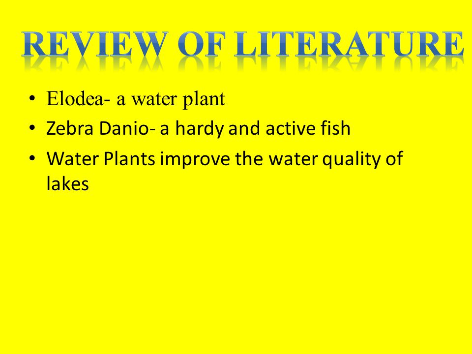 Elodea- a water plant Zebra Danio- a hardy and active fish Water Plants improve the water quality of lakes