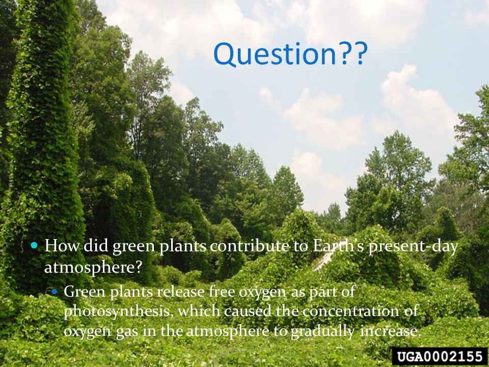 Question?? How did green plants contribute to Earth's present-day atmosphere? Green plants release free oxygen as part of photosynthesis, which caused