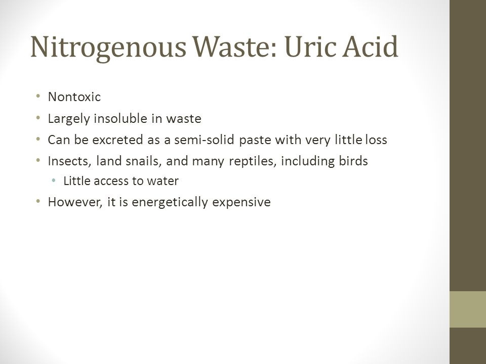 Nitrogenous Waste: Uric Acid Nontoxic Largely insoluble in waste Can be excreted as a semi-solid paste with very little loss Insects, land snails, and many reptiles, including birds Little access to water However, it is energetically expensive