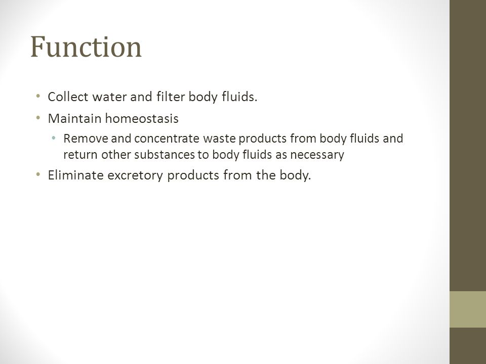 Kidney Eliminate wastes from the bloodstream by production of urine.