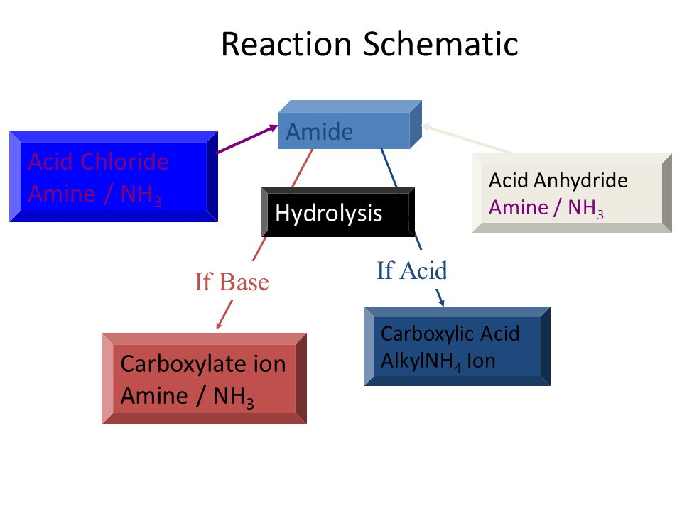 Reaction Schematic Amide Carboxylate ion Amine / NH 3 Carboxylic Acid AlkylNH 4 Ion If Base If Acid Acid Chloride Amine / NH 3 Hydrolysis Acid Anhydride Amine / NH 3