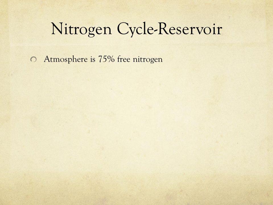 Nitrogen Cycle-Reservoir Atmosphere is 75% free nitrogen