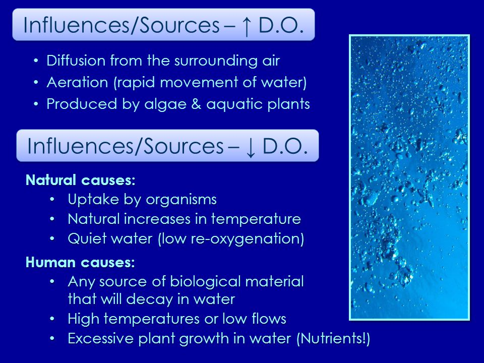 Natural causes: Uptake by organisms Uptake by organisms Natural increases in temperature Natural increases in temperature Quiet water (low re-oxygenation) Quiet water (low re-oxygenation) Human causes: Any source of biological material that will decay in water Any source of biological material that will decay in water High temperatures or low flows High temperatures or low flows Excessive plant growth in water (Nutrients!) Excessive plant growth in water (Nutrients!) Influences/Sources – ↑ D.O.