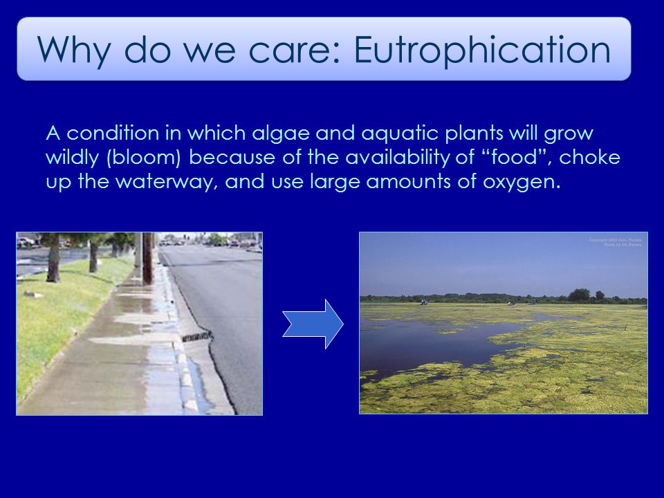 Why do we care: Eutrophication A condition in which algae and aquatic plants will grow wildly (bloom) because of the availability of food , choke up the waterway, and use large amounts of oxygen.