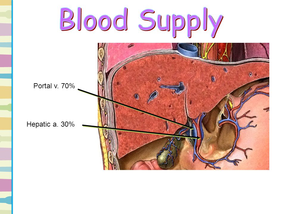 The most common anatomy of the hepatic artery