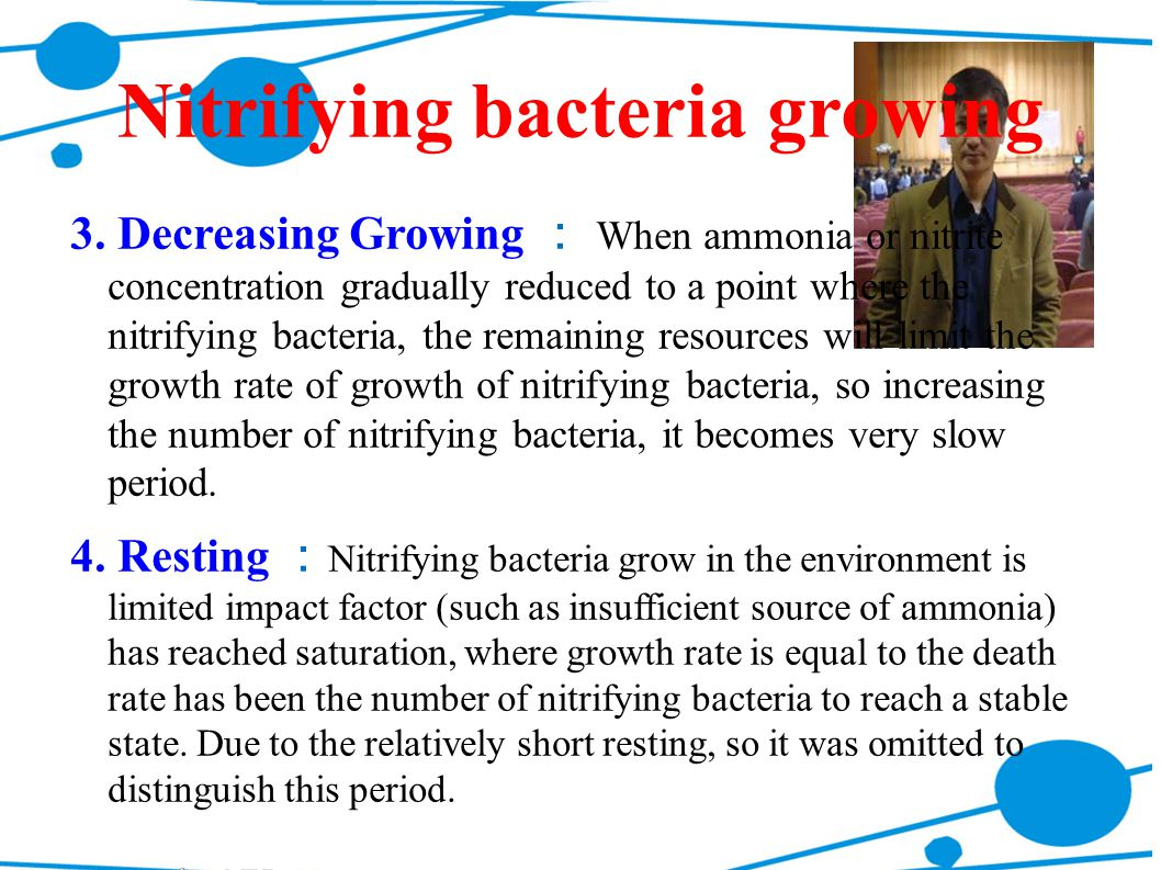 Nitrifying bacteria growing 3. Decreasing Growing : When ammonia or nitrite concentration gradually reduced to a point where the nitrifying bacteria,