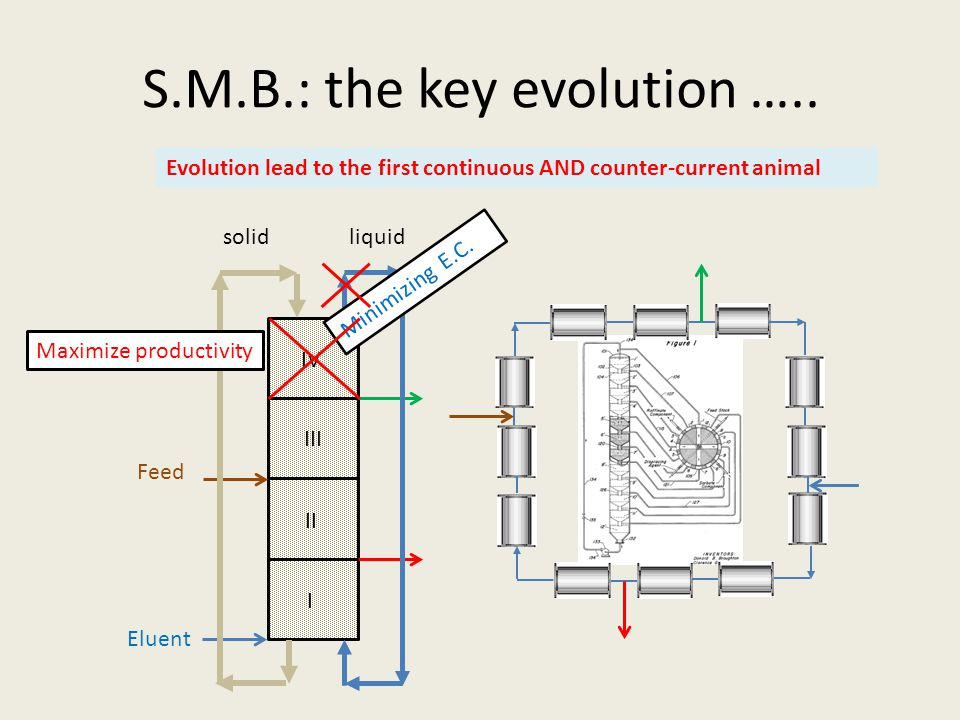 S.M.B.: the key evolution ….. solidliquid I II III IV Minimizing E.C. Evolution lead to the first continuous AND counter-current animal Maximize produ